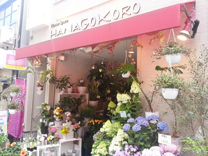 HANAGOKORO4